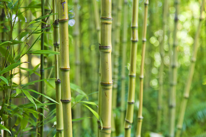Are Bamboo Pillows Toxic?